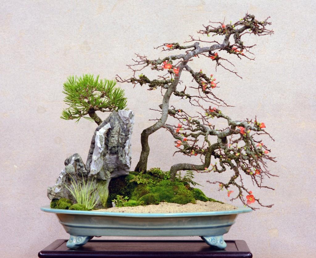 長寿梅石付き盆栽
