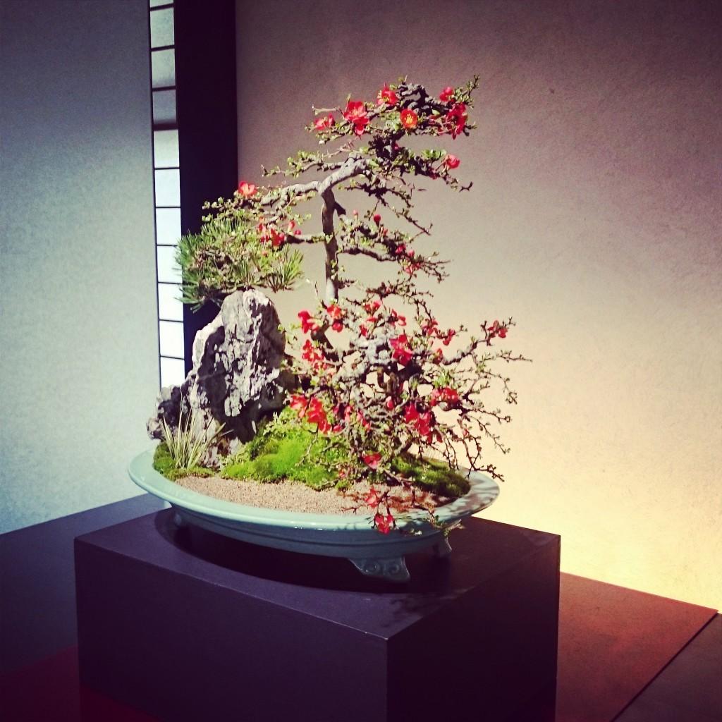 山田香織 盆山十徳 盆栽 さいたま市 大宮盆栽美術館