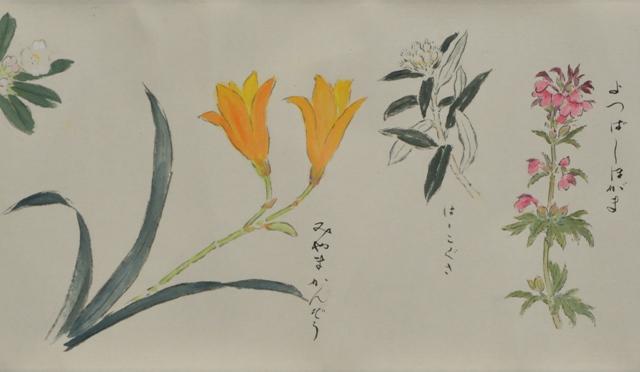 ②絵巻「白山の高山植物」(部分)1