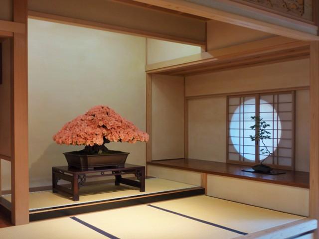 さつき(若恵比須)礒部緑園(27年度)1