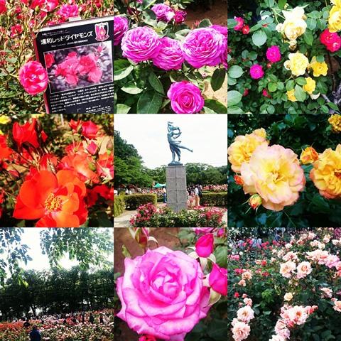 ばらまつり バラ祭り 与野 与野公園