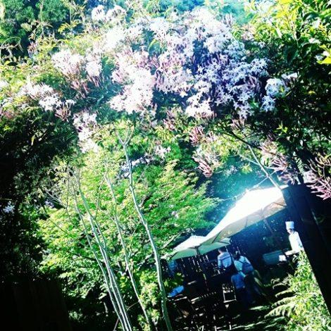 三橋の森マルシェ ウェディング  ラ・クラリエール 埼玉