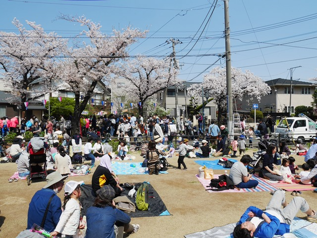 西南さくら祭り 花と緑の散歩道 武蔵浦和  さいたま