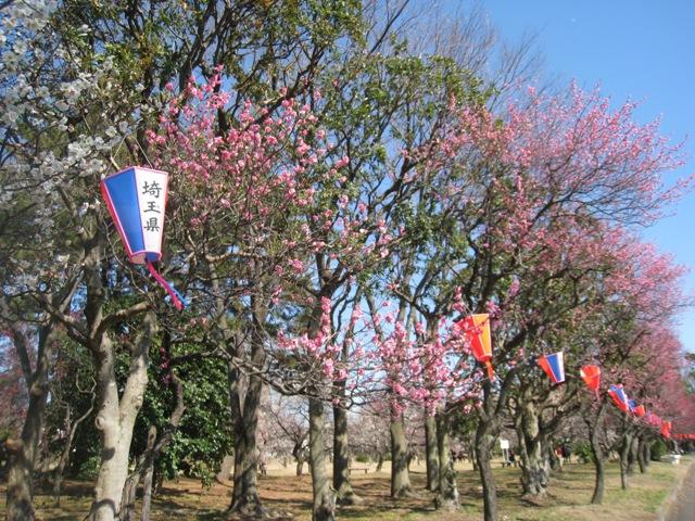 大宮第二公園 梅まつり 大陶器市 大宮公園
