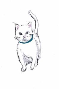 mokuji_cat