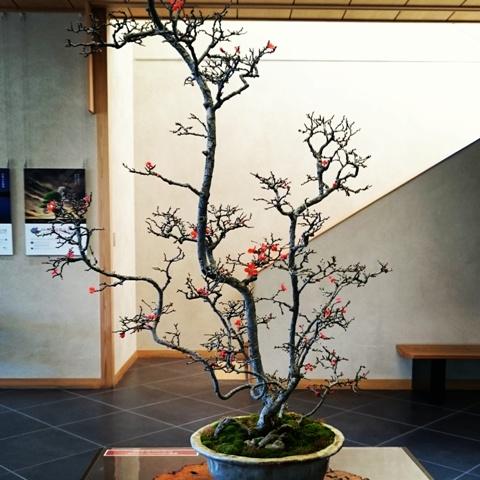 あらい太朗 山田香織 盆栽家 さいたま観光大使 世界盆栽大会