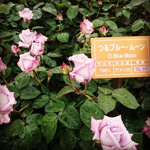 神代植物公園  調布 バラ