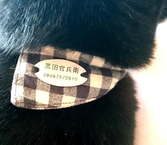 姫路 黒猫カフェ cat cafe ねこびやか