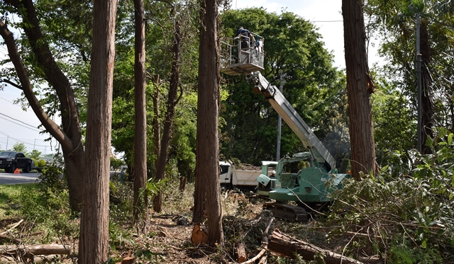 サイサン 環境保全基金 助成申請